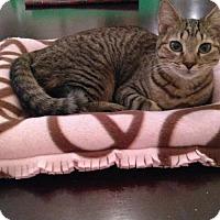 Adopt A Pet :: Sparkle - Glendale, AZ