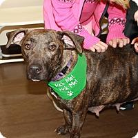 Plott Hound Mix Dog for adoption in Summerville, South Carolina - Hope