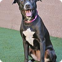 Adopt A Pet :: Laila - Coronado, CA