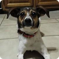 Adopt A Pet :: Luna - WESTMINSTER, MD