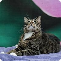 Adopt A Pet :: Kevin - Houston, TX