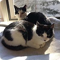 Adopt A Pet :: Pickles and Possum - Richmond, VA