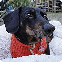 Adopt A Pet :: DAVEY - Portland, OR