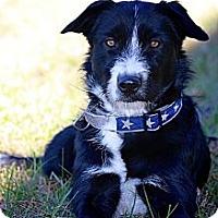 Adopt A Pet :: Anna BANANA - Flowery Branch, GA
