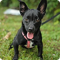 Adopt A Pet :: Rayna - Nashville, TN