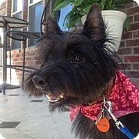 Adopt A Pet :: Andrew - Frisco, TX