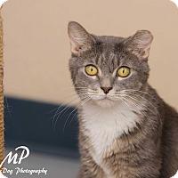 Adopt A Pet :: Sunny - Fountain Hills, AZ