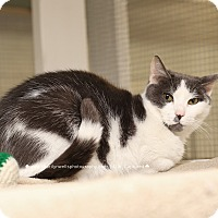 Adopt A Pet :: Teddy - Fayetteville, NC