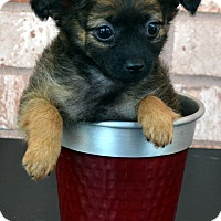 Adopt A Pet :: Jhonny-Adoption pending - Bridgeton, MO