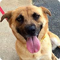 Adopt A Pet :: Sadie **Adoption Pending** - Fairfax, VA