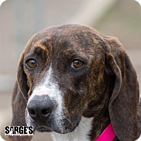 Adopt A Pet :: Squirt - Waynesville, NC