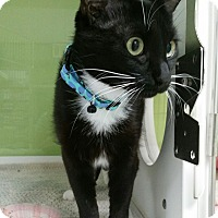 Adopt A Pet :: sara - Muskegon, MI