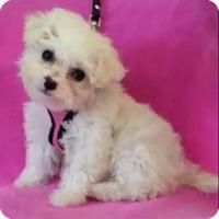 Adopt A Pet :: Claire - San Dimas, CA