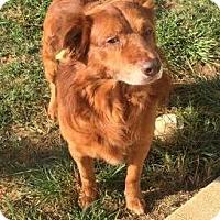 Adopt A Pet :: Chaka - New Canaan, CT