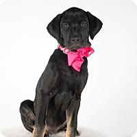 Adopt A Pet :: Maggie - St. Louis Park, MN