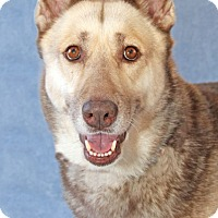 Adopt A Pet :: Delilah - Encinitas, CA