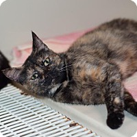 Adopt A Pet :: Bashful - Fairfax, VA