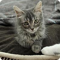 Adopt A Pet :: Maisie - Sacramento, CA