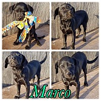 Adopt A Pet :: Marco - New Milford, CT