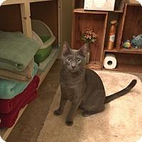 Adopt A Pet :: Abu - Modesto, CA
