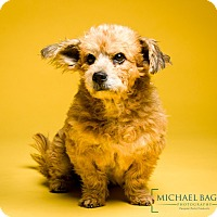Adopt A Pet :: Hedwig - MEET ME - Woonsocket, RI