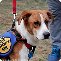 Adopt A Pet :: Ellis (Has Application) - Washington, DC