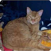 Adopt A Pet :: Helios - Davis, CA