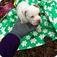 Adopt A Pet :: Nala - Blanchard, OK