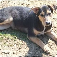 Adopt A Pet :: Gail - Harrisburgh, PA