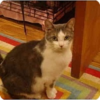 Adopt A Pet :: Sweetie Pie - Muncie, IN