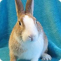 Adopt A Pet :: February - Los Angeles, CA