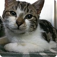 Adopt A Pet :: Meryl Streep - Richboro, PA