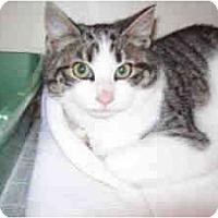 Adopt A Pet :: Forrest - Arlington, VA