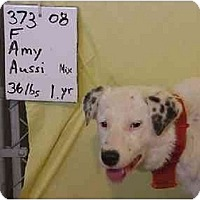 Adopt A Pet :: Amy/RESCUED! - Zanesville, OH