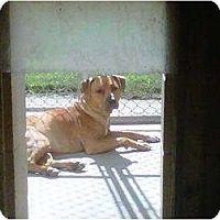 Adopt A Pet :: # 8 URGENT! - Carrollton, OH