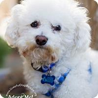 Adopt A Pet :: Francis - San Francisco, CA
