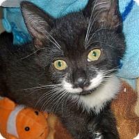 Adopt A Pet :: Cutie - Island Park, NY
