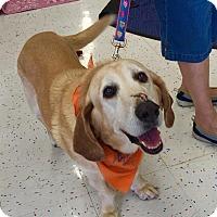 Adopt A Pet :: Doogie - Scottsdale, AZ