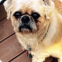 Adopt A Pet :: Sammy - Toronto, ON