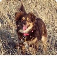 Adopt A Pet :: Missy - Winchester, CA