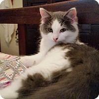 Adopt A Pet :: Glacier - Ocala, FL