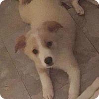 Adopt A Pet :: Mor'Du - Houston, TX