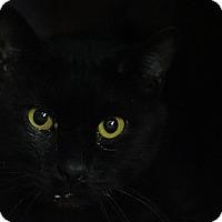 Adopt A Pet :: Spookie - Elyria, OH