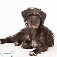 Adopt A Pet :: Frack - MEET HIM - Norwalk, CT