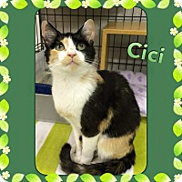 Adopt A Pet :: Cici - Atco, NJ