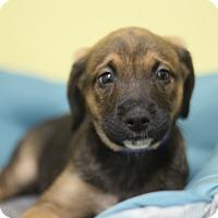 Adopt A Pet :: Baynard - Waldorf, MD