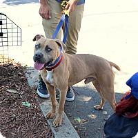 Adopt A Pet :: Owen - Yuba City, CA