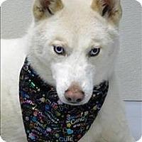 Adopt A Pet :: Alpine - Topeka, KS
