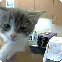 Adopt A Pet :: *BELLE - Sacramento, CA