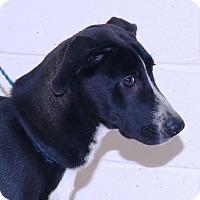 Retriever (Unknown Type) Mix Dog for adoption in McDonough, Georgia - Morley